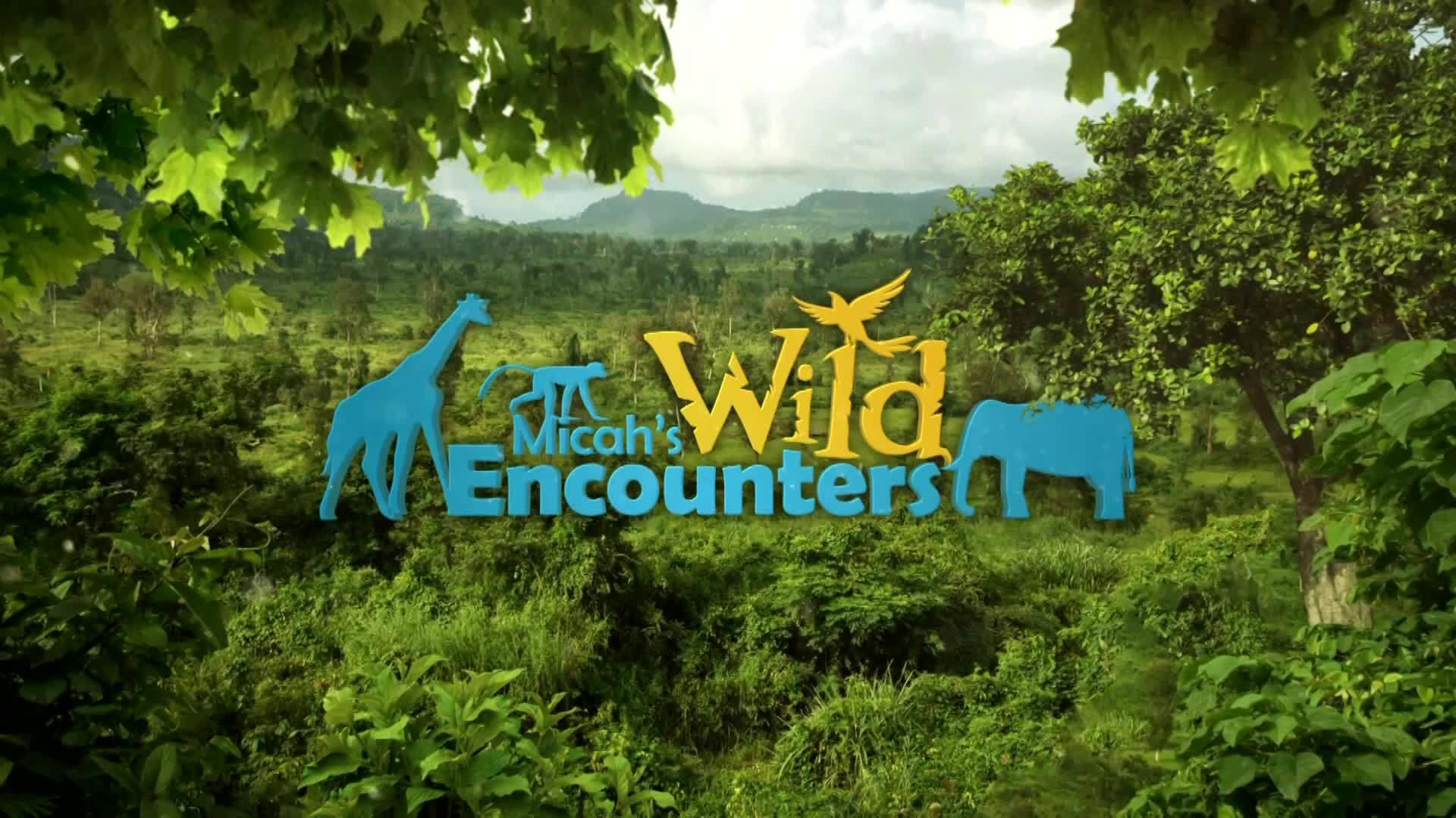 Wild Encounters: Commissary