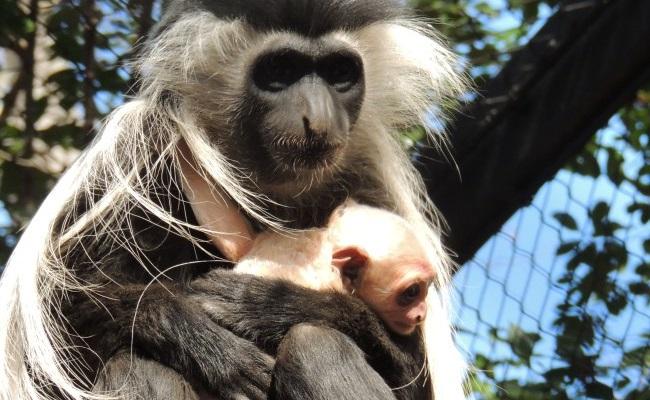 Monkey_135973