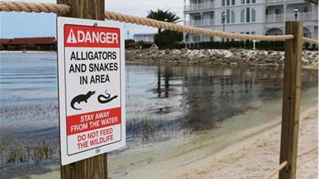 alligator-2_183063