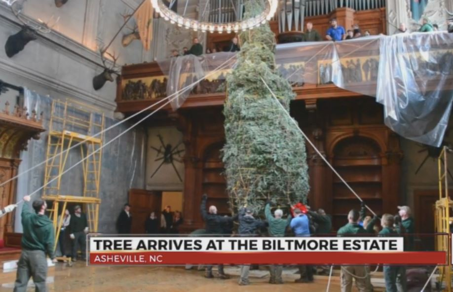 Christman tree arrives at Biltmore House_429654