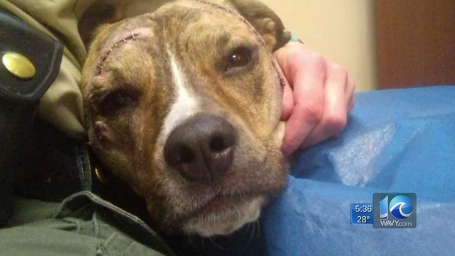 Proposed_bill_could_give_beaten_animals__0_67927657_ver1.0_640_360_1548127230775.jpg