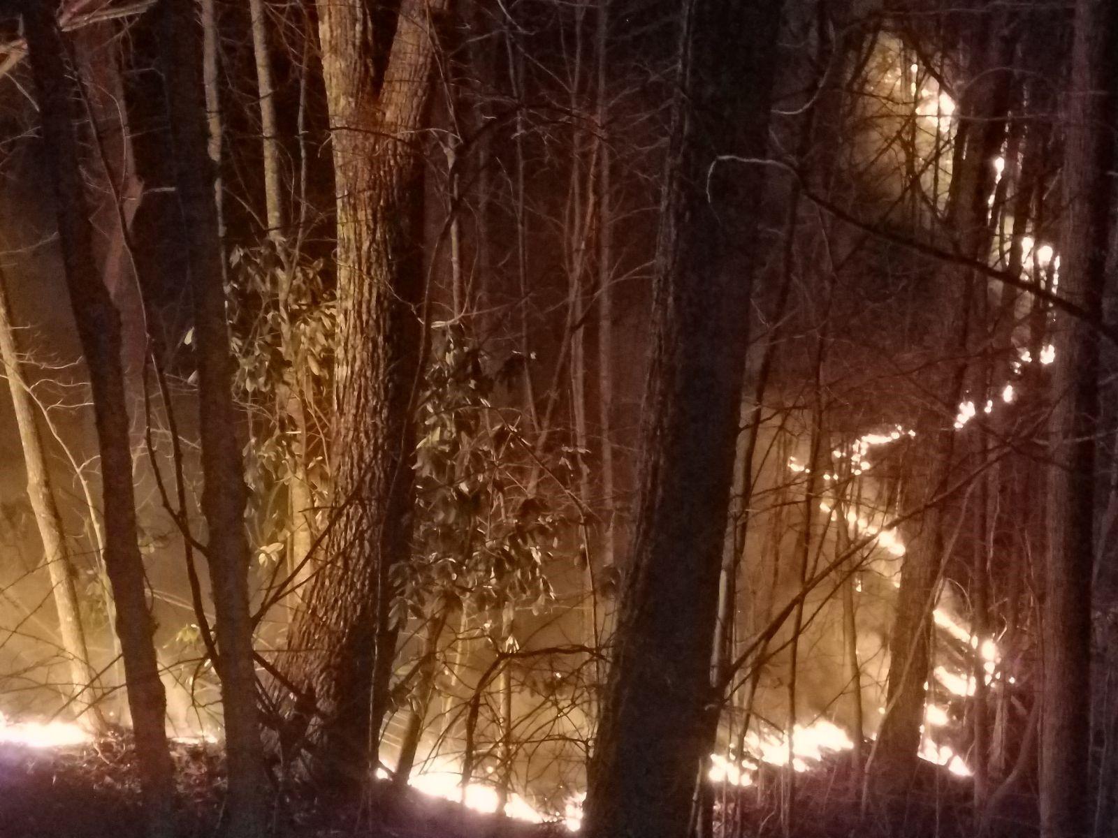 smyth forest fire 2_1553526775952.jpg.jpg