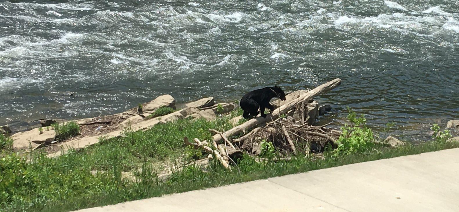 bear at riverfront seafood