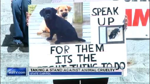 Animal rights_136171