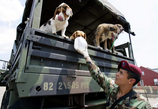 FILE PHOTO Dogs affected by flooding Photo by Lynne Sladky, AP Photo_206861