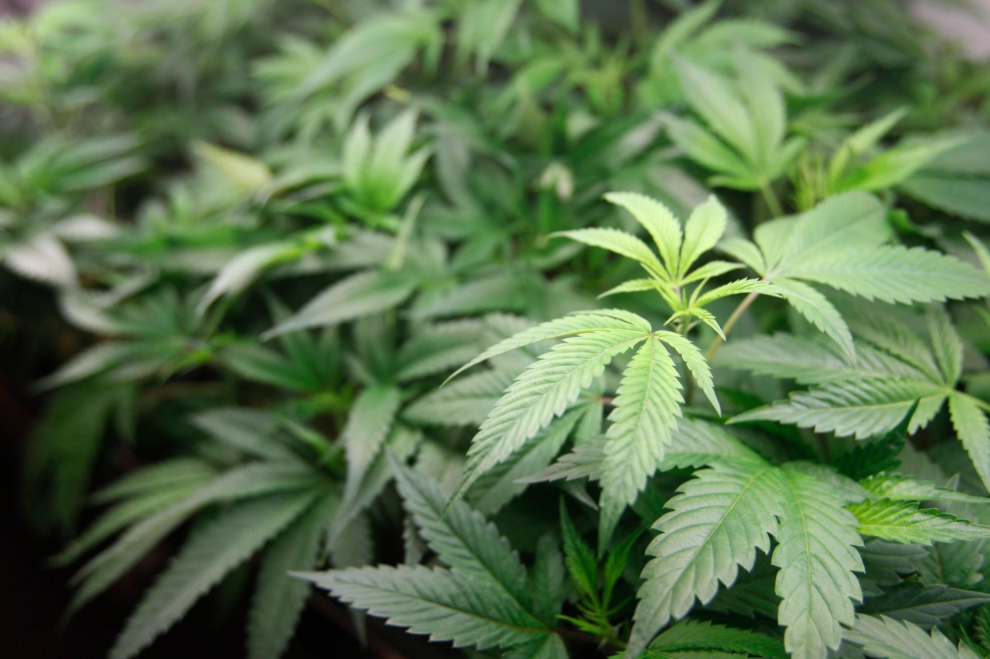 California_Marijuana_Convictions_00667-159532.jpg80492423
