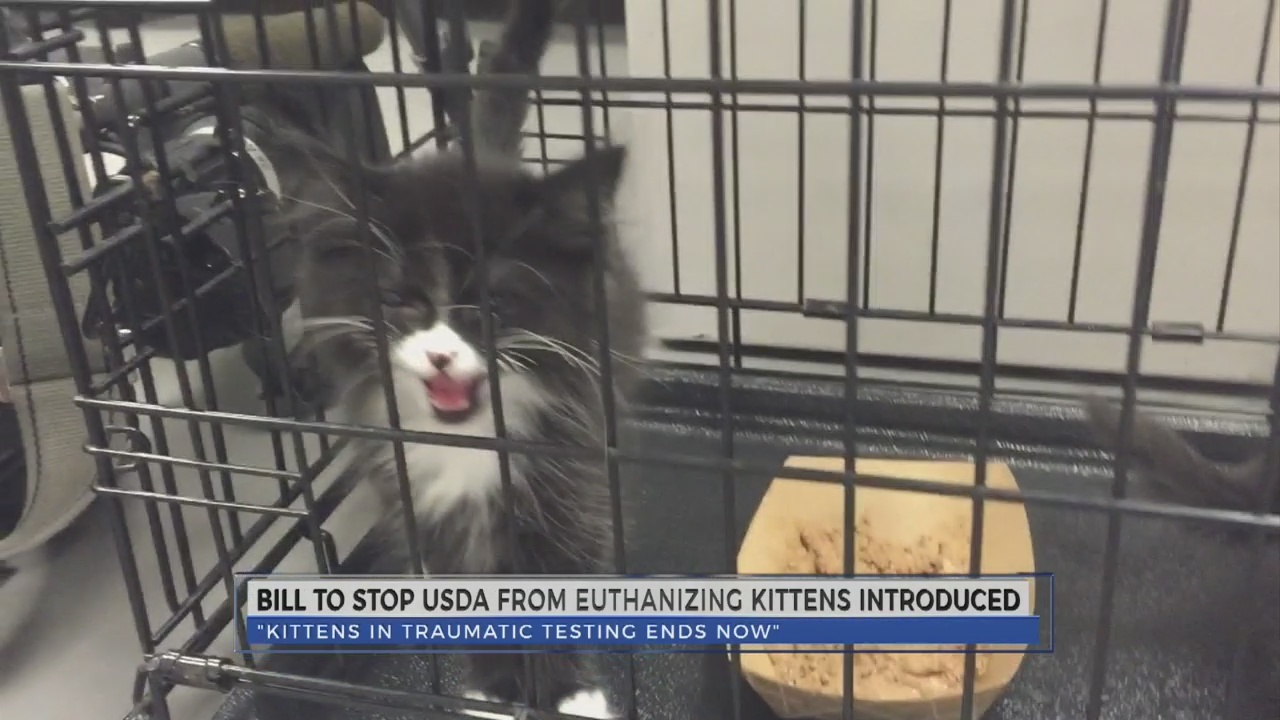 New bill proposed to stop USDA from euthanizing kittens
