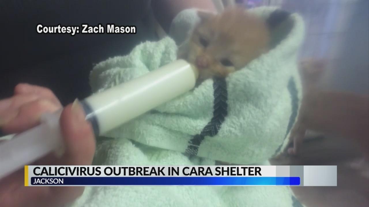 Cattery virus outbreak