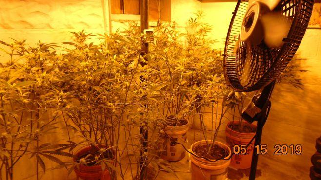Weathersfield pot grown