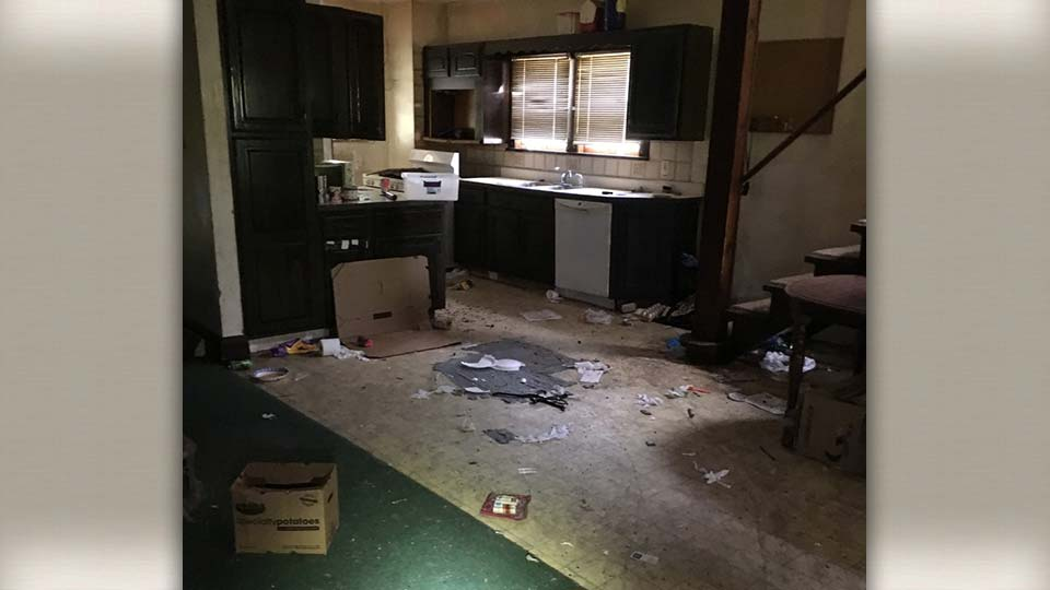 Living conditions for the cats found in abandoned home, Youngstown, Ohio.