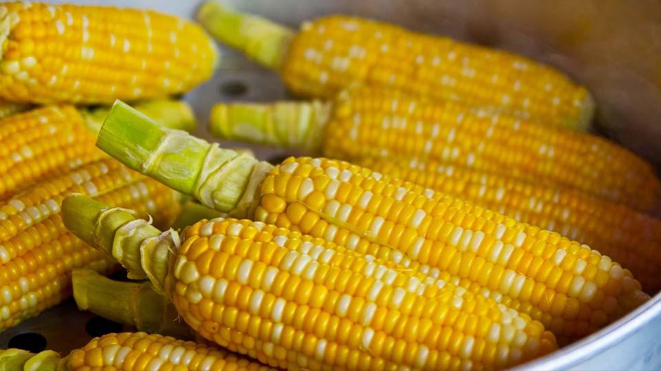 Corn generic