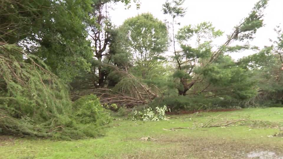 The tornado took down more than 300 trees at Yankee Run Golf Course.