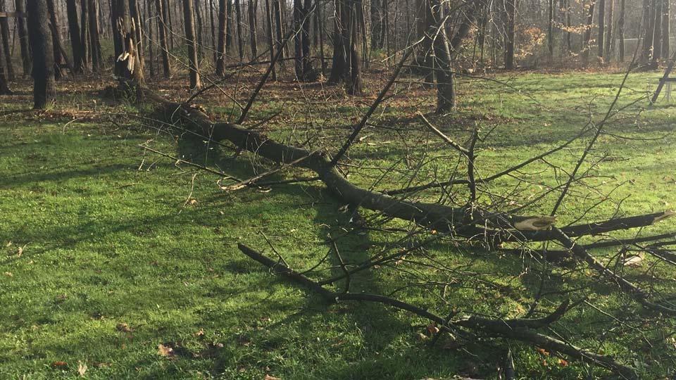 Ellsworth Tree Down