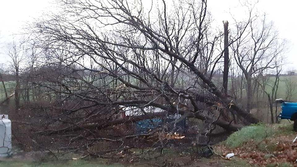 Tree Down, New Waterford