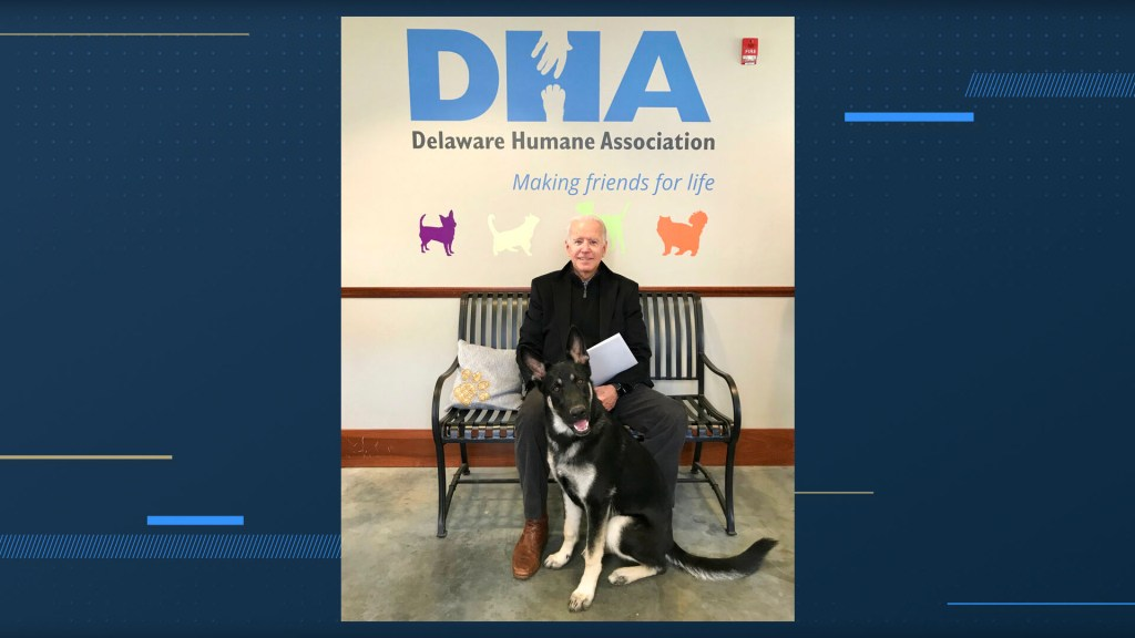 Biden sends dogs home to Delaware after 'biting incident' against White House security: report