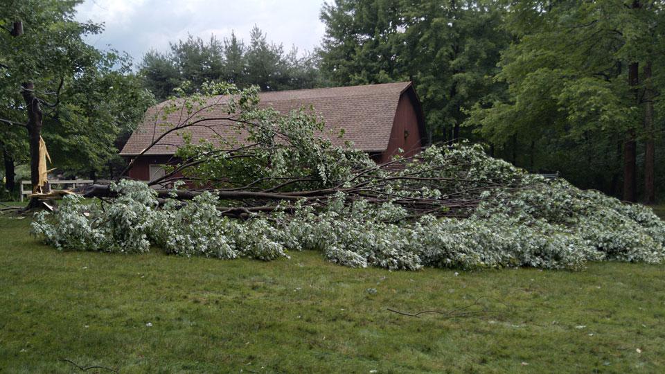 Poland Township tree damage