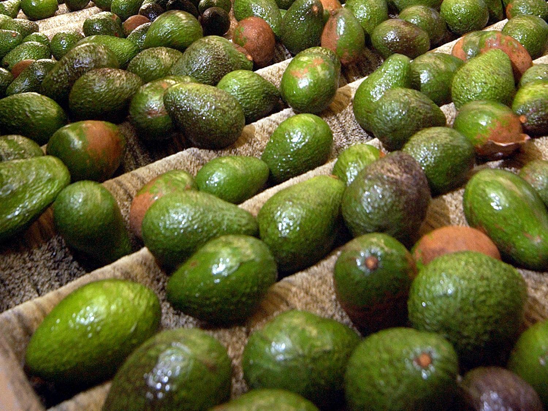 avocados_375378