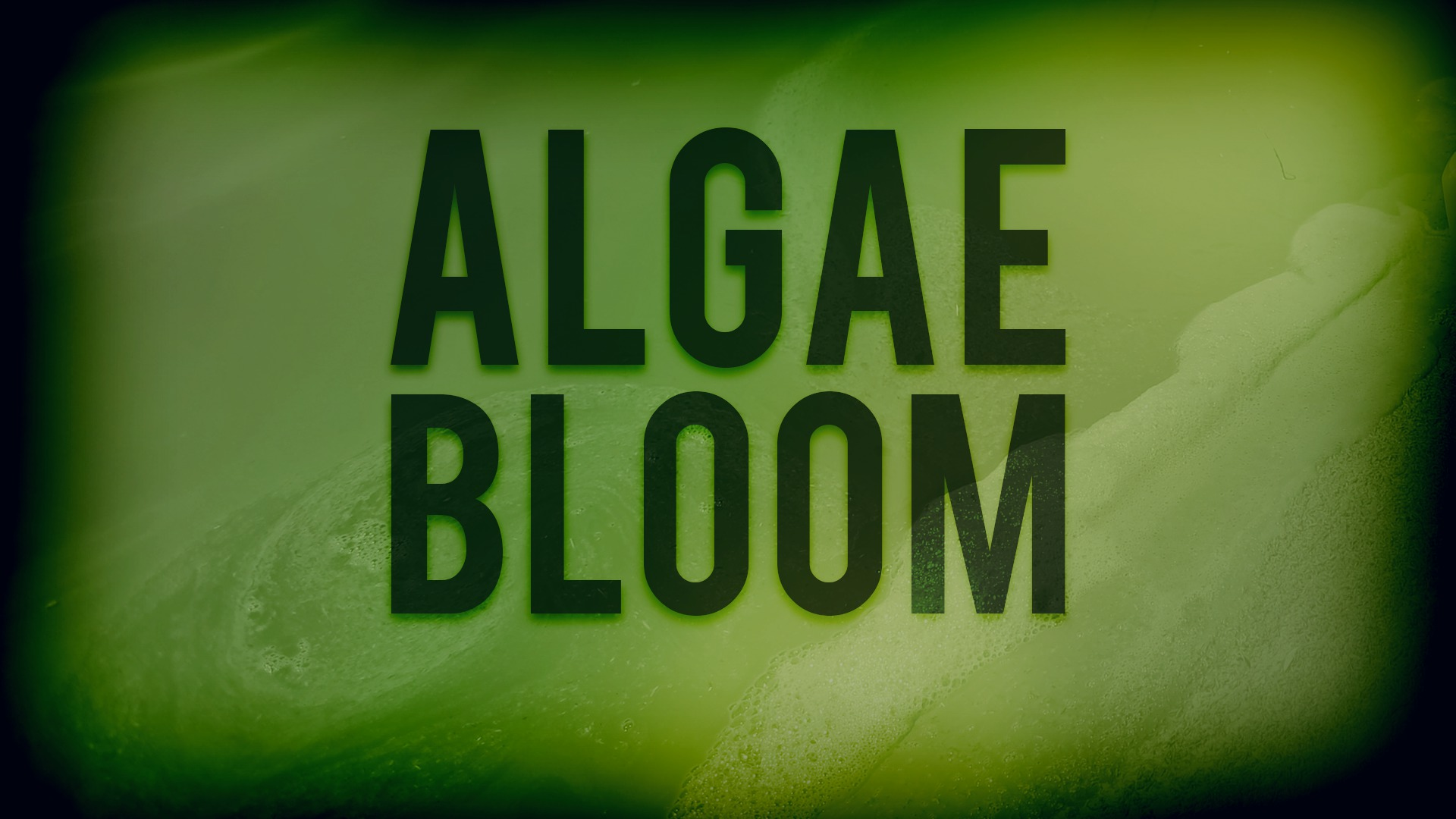 algae bloom_385958