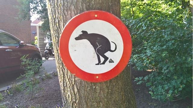 Anti-Dog_poop_sign_in_a_garden,_Oude_Pekela__OP_2018_CP__01_1535229369675_53086220_ver1.0_640_360_1535230426998.jpg
