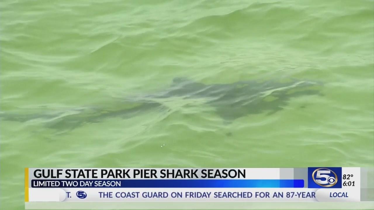 Shark_fishing_season_announced_for_Gulf__0_20180616021102