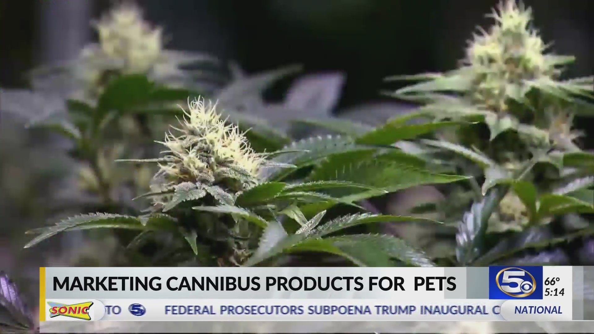 VIDEO: Pot products marketed for pets
