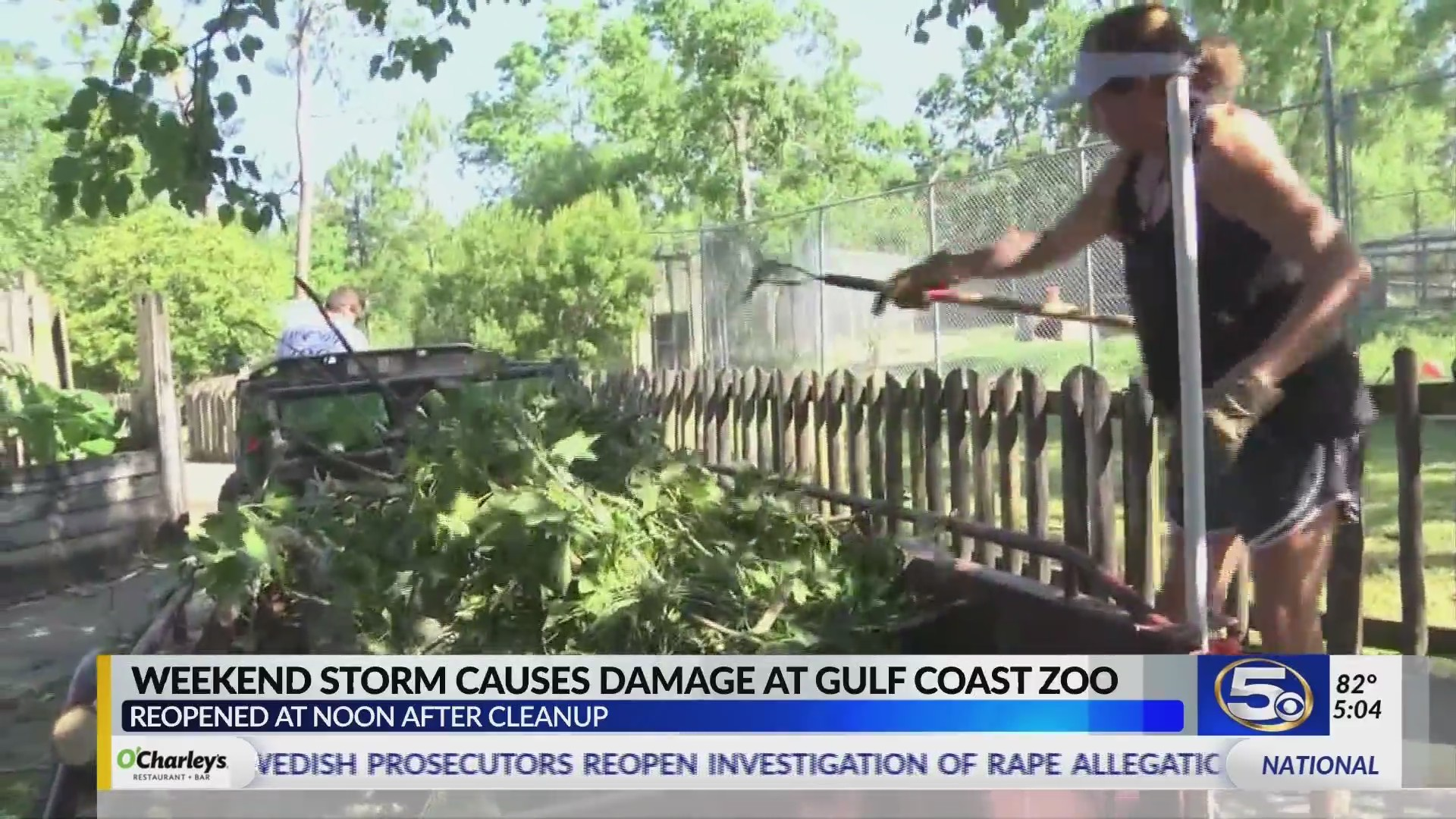 """VIDEO: """"Little Zoo That Could"""" Reopens at Noon Monday"""