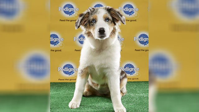 Tucker, Puppy Bowl XIII_351707
