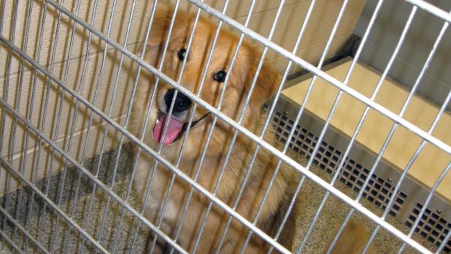 Dog shelter generic_363716
