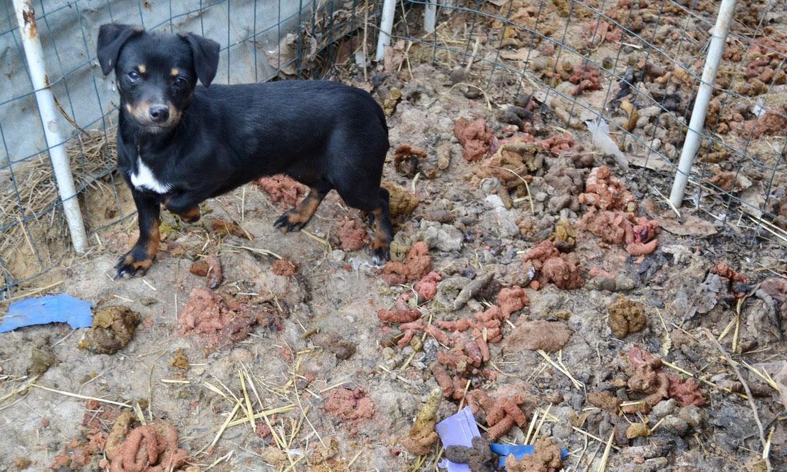 Illinois animal rescue in lebanon_475121