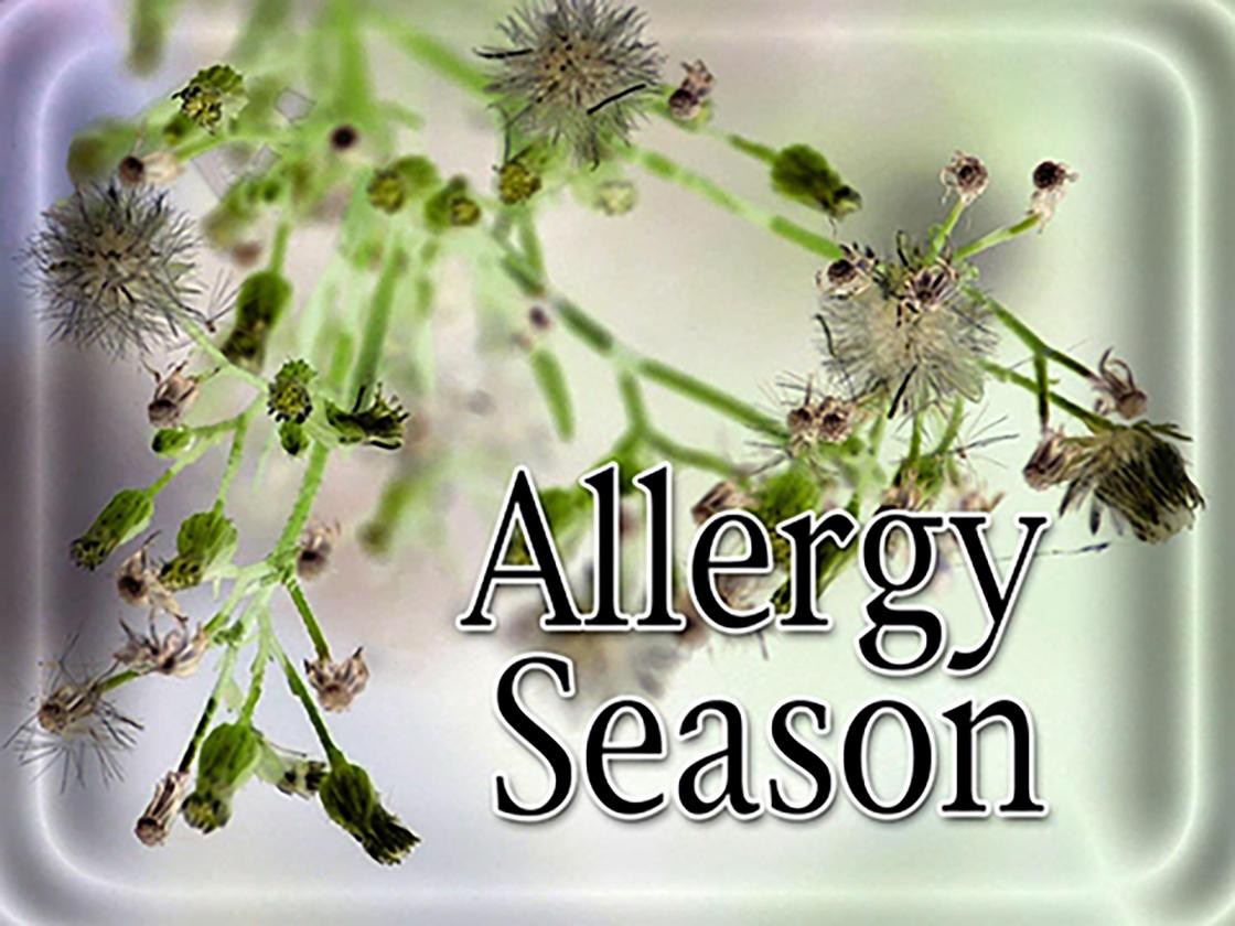 Allergy season_1552427711115.jpg.jpg