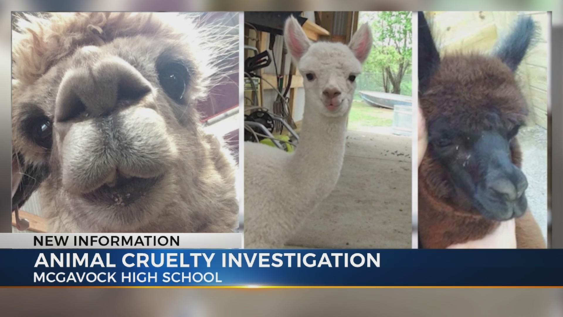 Teacher_cited_after_alpacas_died_0_20190312211400