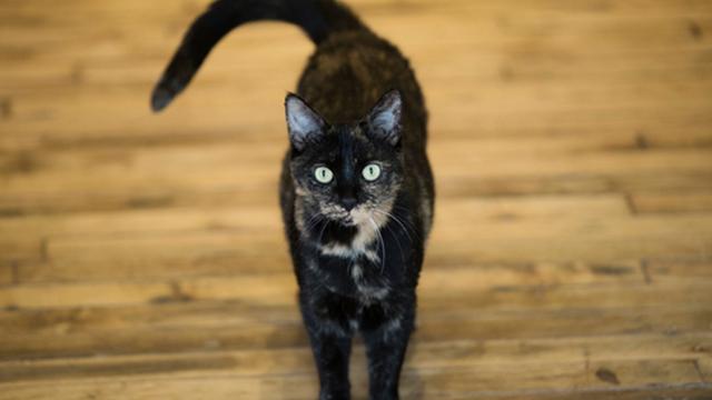 CAT GENERIC WEB AP_1554418483921.jpg.jpg
