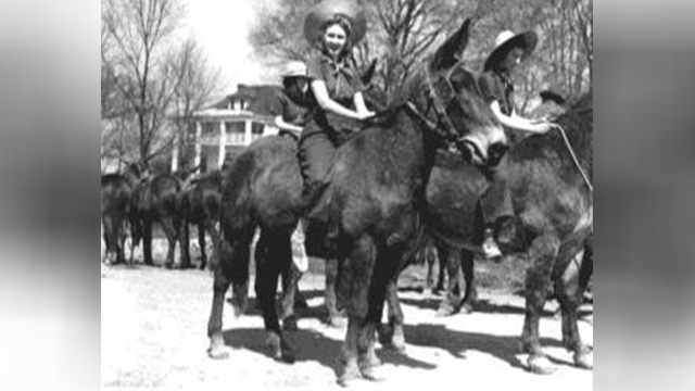 Mule Day 1939 image 2