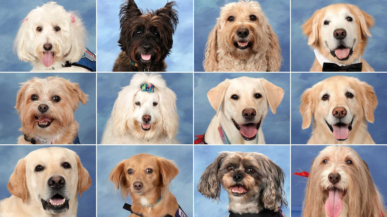 Parkland therapy dogs_1558133793431.jpg_483813_ver1.0_1280_720_1558139177507.jpg.jpg