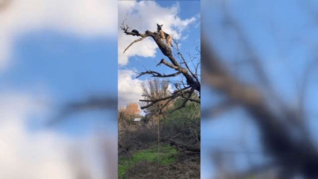 Firefighters rescue dog stuck in tree after chasing cat