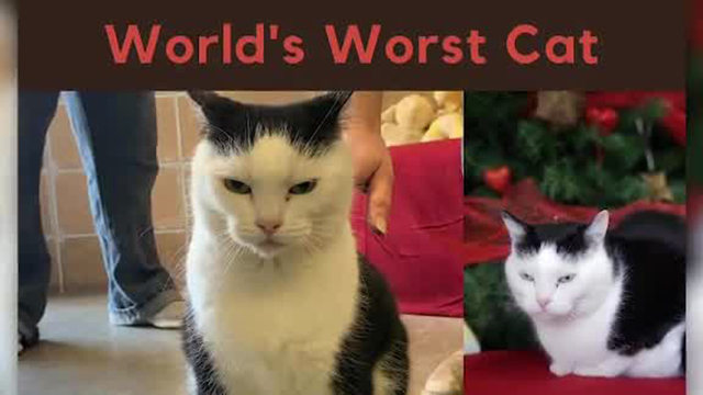 World's Worst Cat