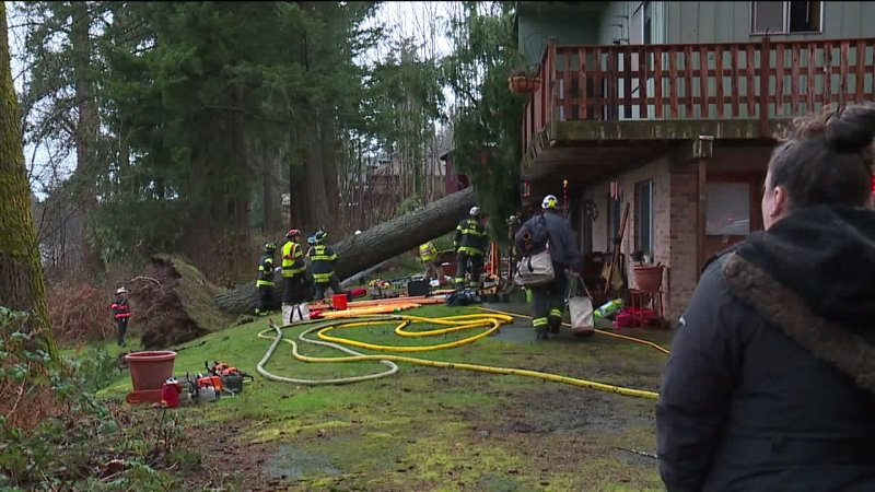tree-falls-on-renton-home