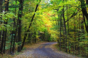 palmer park - trail