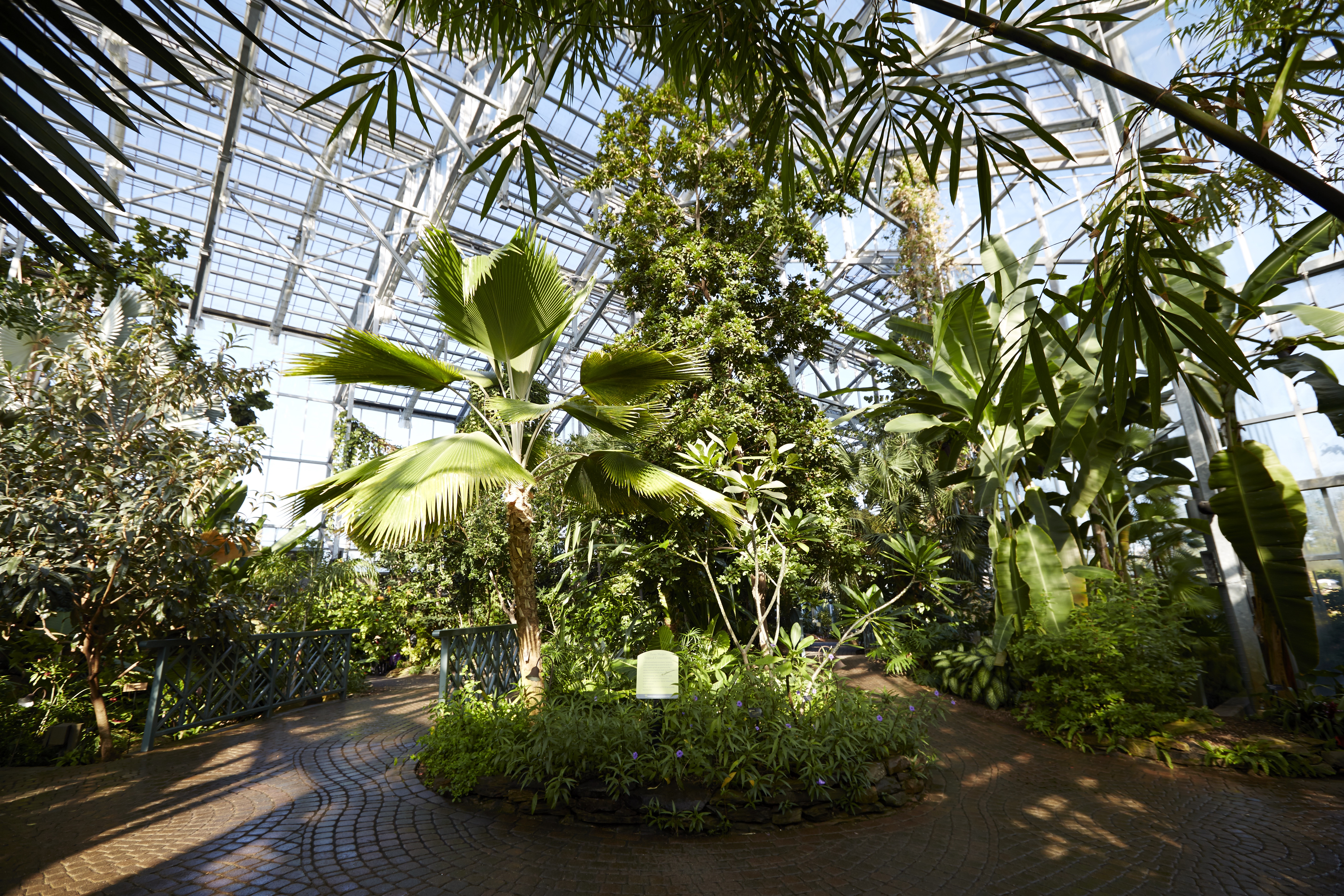 Lena Meijer Tropical Conservatory Inside photo by DeanVanDis copy - Butterflies Are Blooming Grand Rapids Frederik Meijer Gardens March 1
