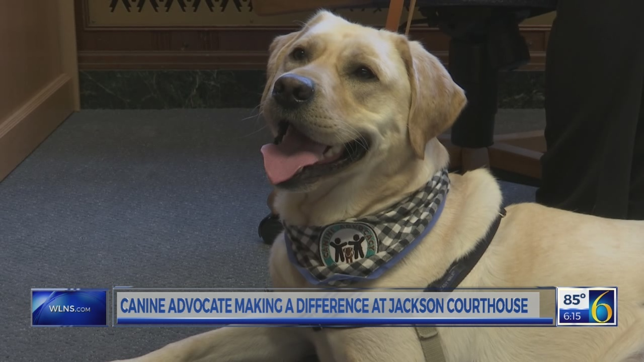 Canine Advocate in Jackson