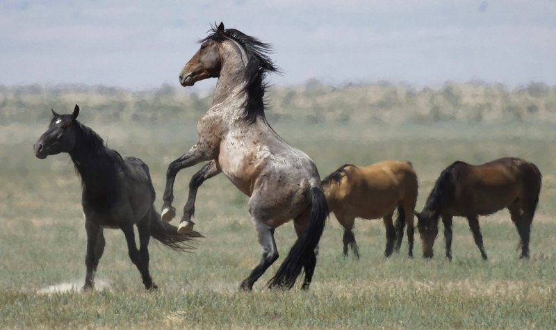 Horses_1532344185496.jpeg