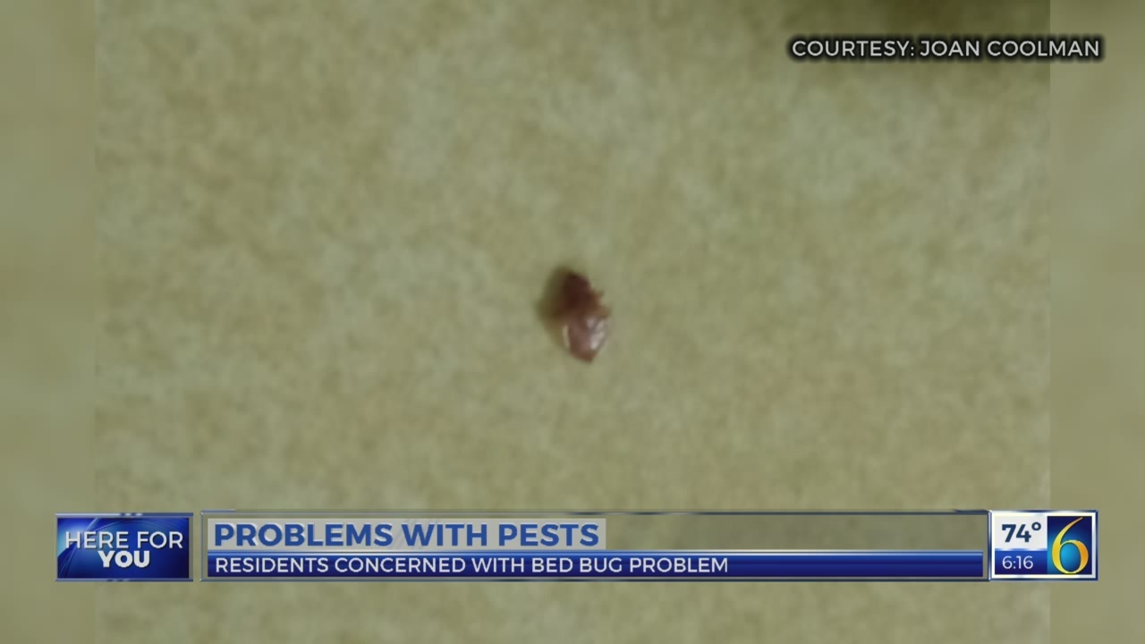 Problems with pests
