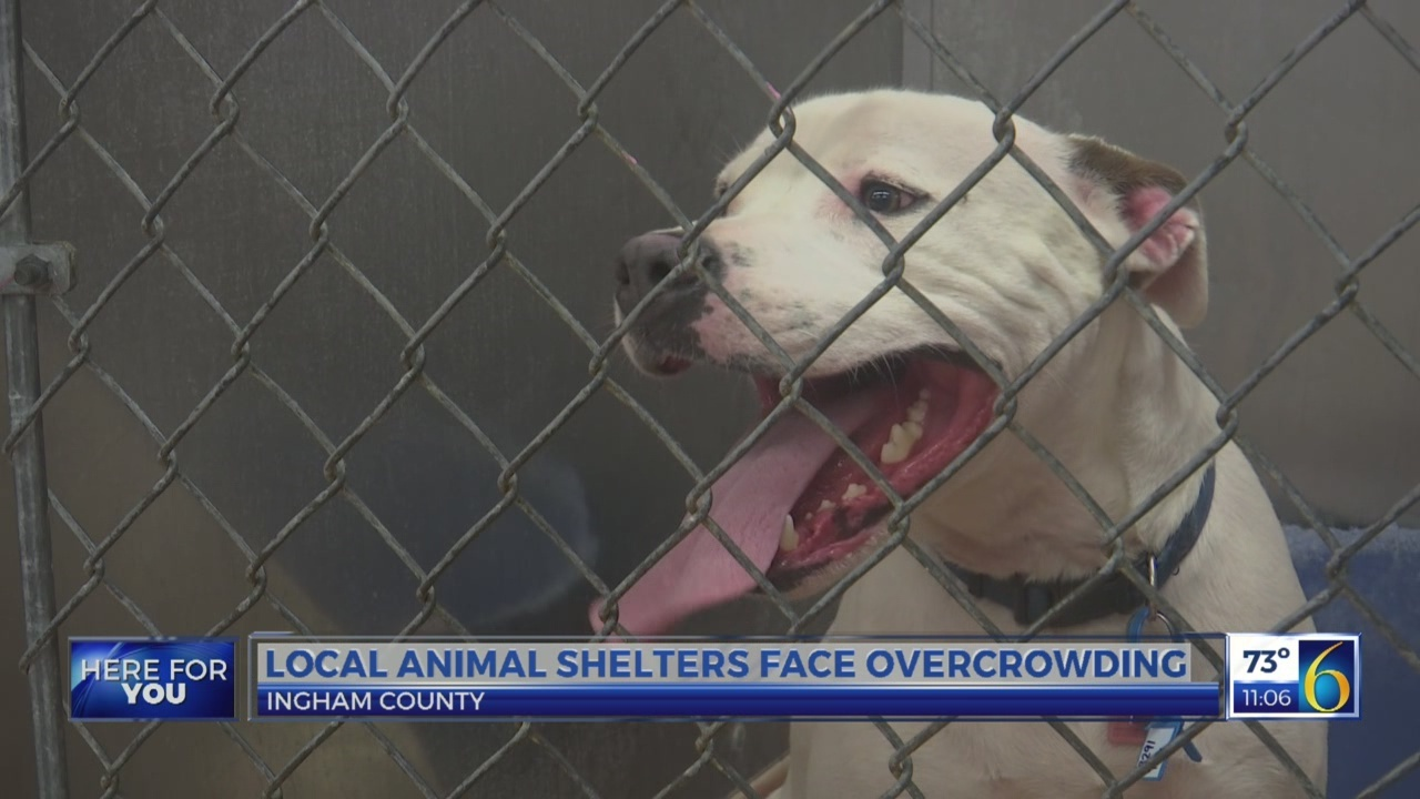 Animal shelters face overcrowding