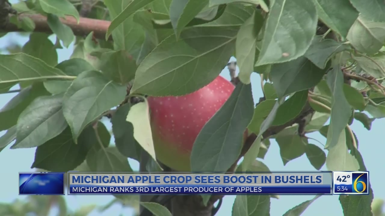 6 News This Morning: michigan apple crop sees boost