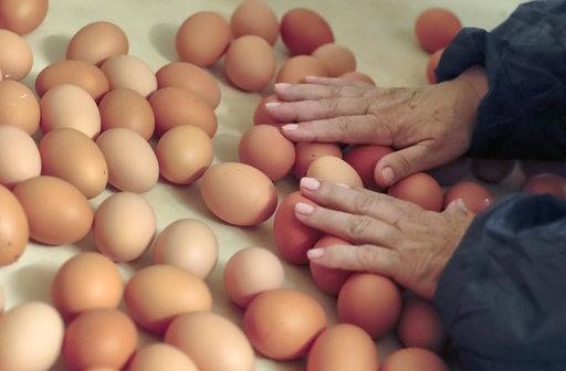 Romania Food Safety Eggs_300778