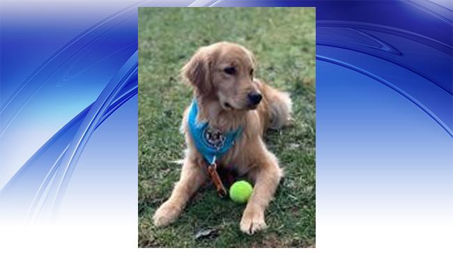 Court dog-full_1549981000304.jpg.jpg