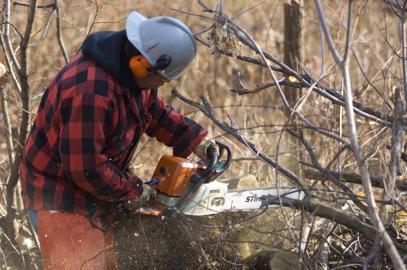 Fuelwood permits_1553536522571.jpg.jpg