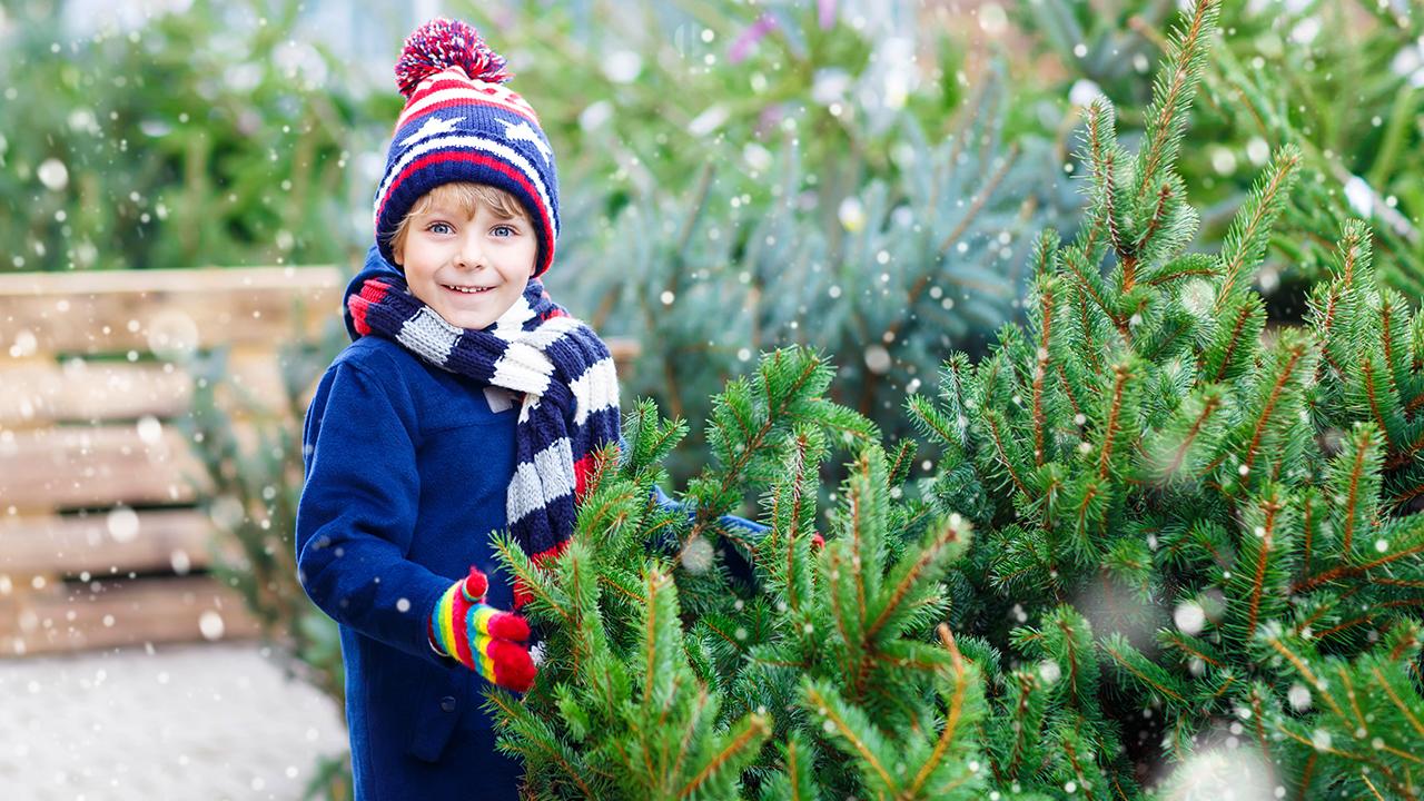 real-christmas-tree_1543440911581_423916_ver1_20181128220647-159532
