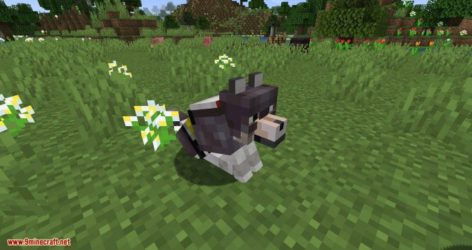 Wolves with armor mod for minecraft 09