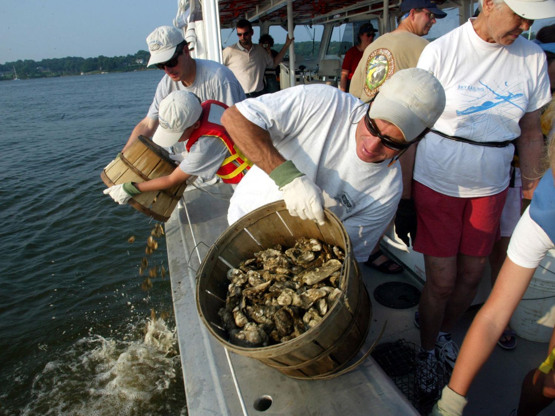 Oyster Harvest_96008